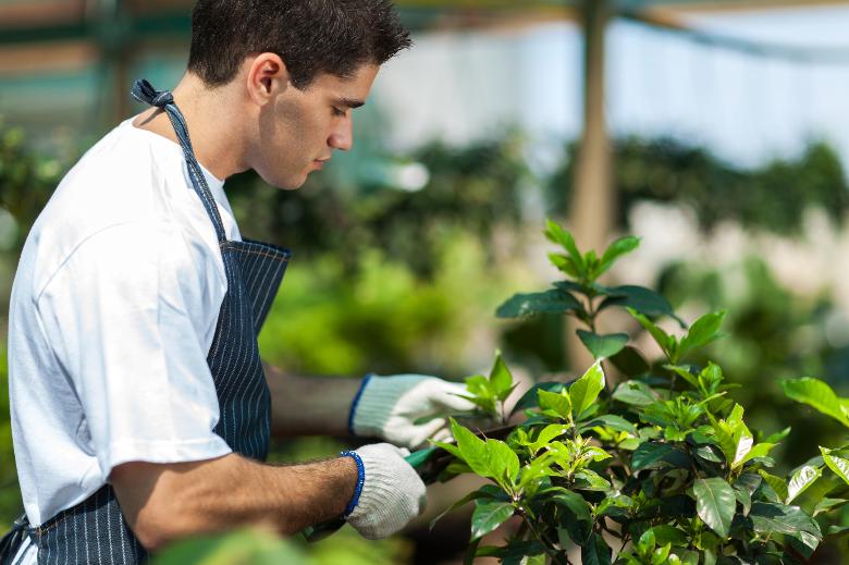 male gardener working in nursery pruning trees