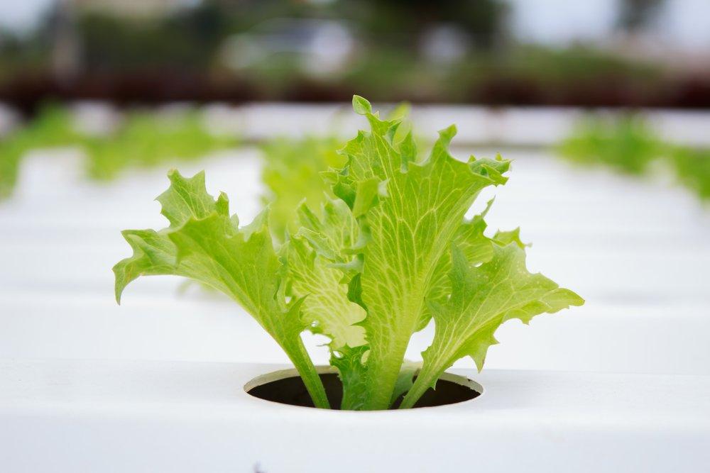 Growing plants by aquaponics
